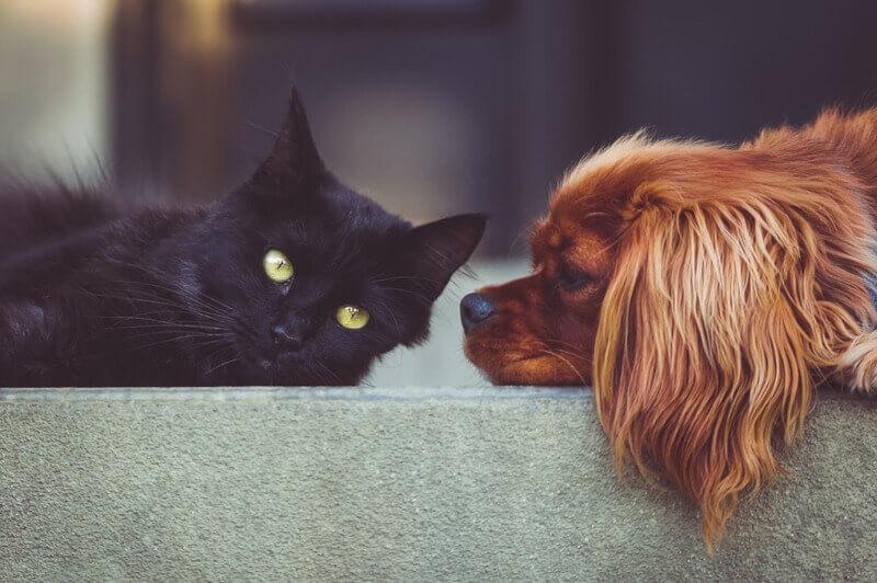Kot i pies leżą na chodniku