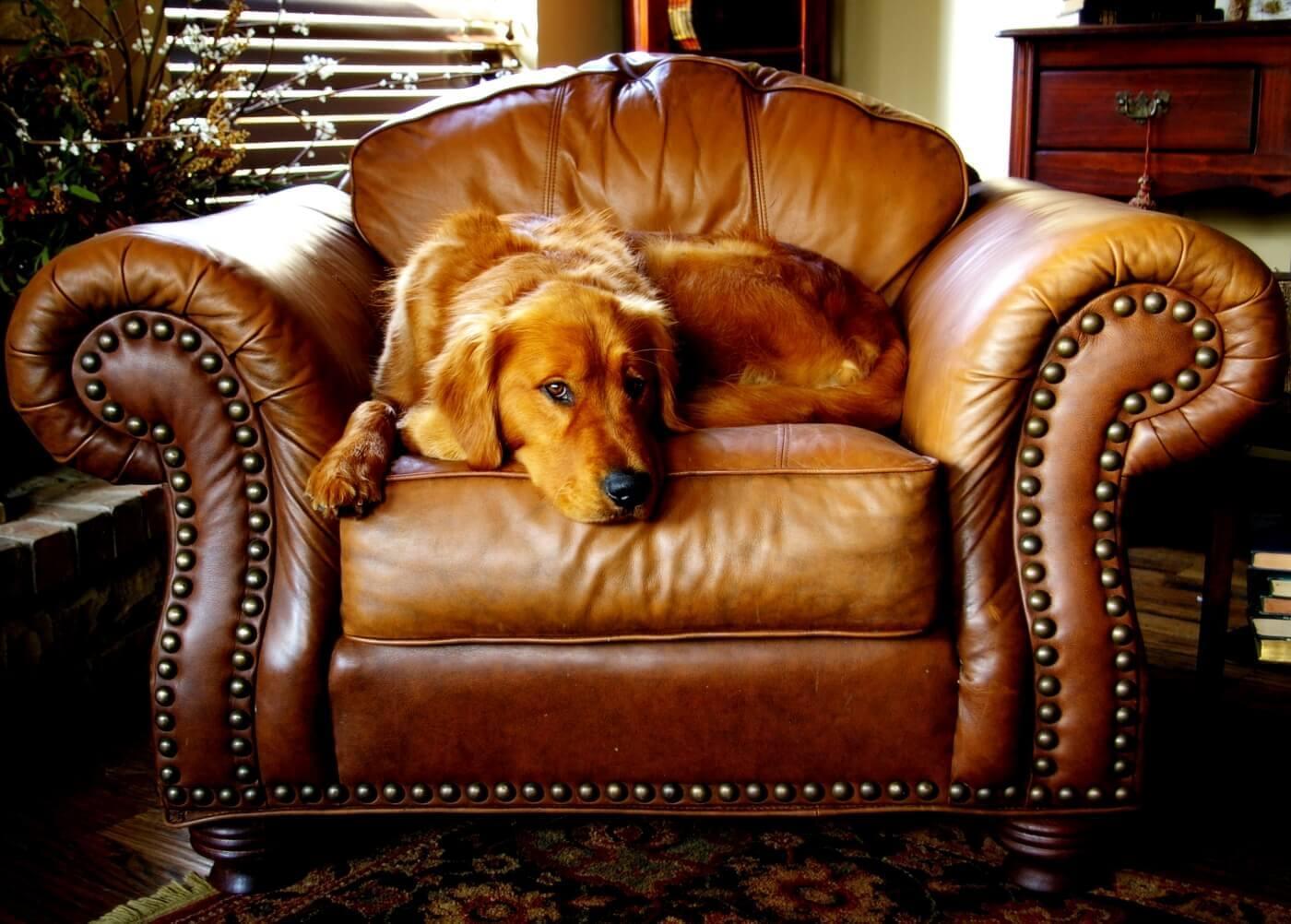 Nadwaga u psa - jak z nią walczyć