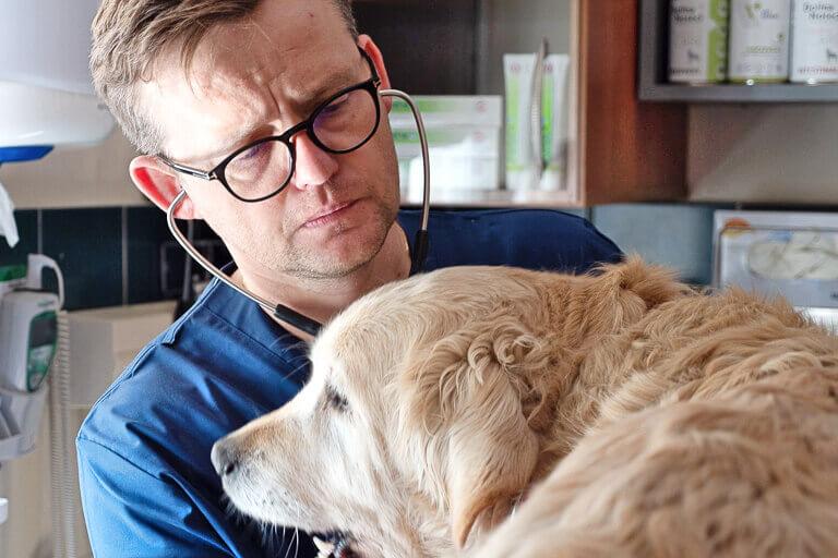 Badanie bicia serca u psa