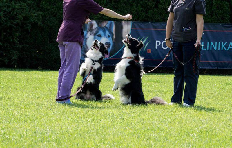 Psy na szkoleniu