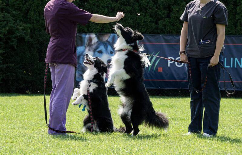 Psy uczą się sztuczek