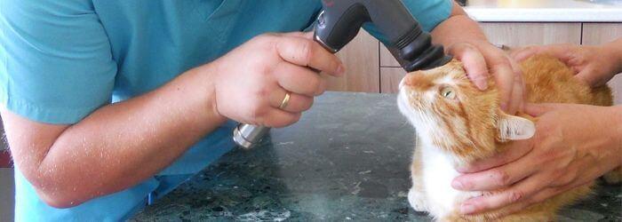 Badanie wzroku u kota