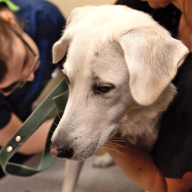 Weterynarze badają psa