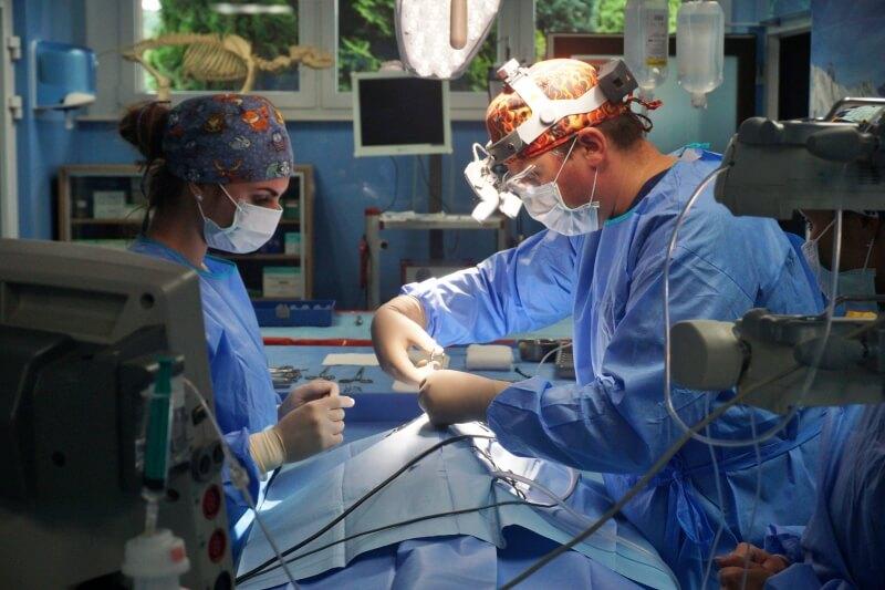 Operacja u weterynarza