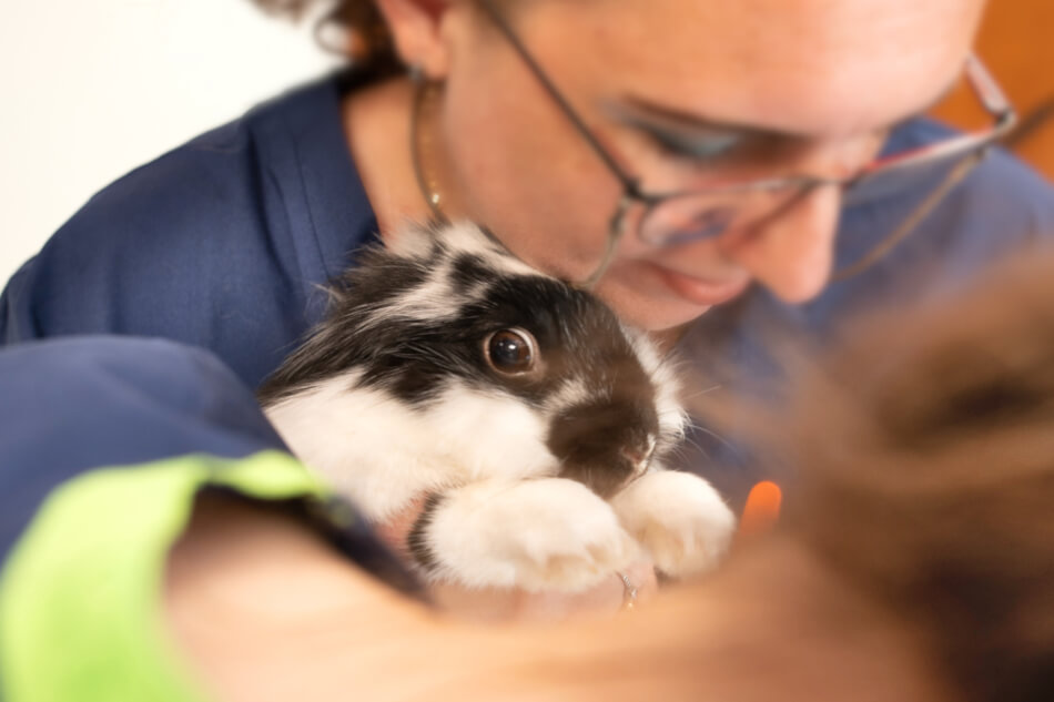 Badanie królika