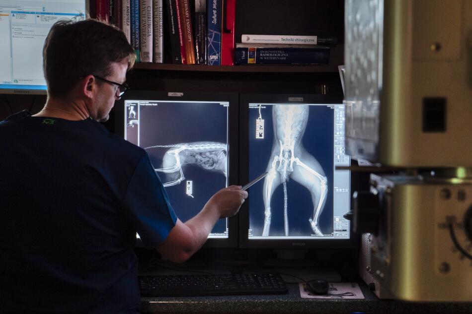 Weterynarz przygląda się zdjęciom rentgenowskim