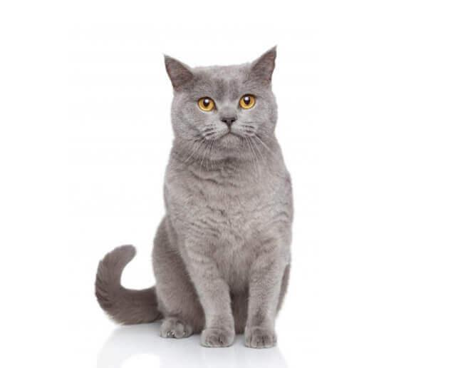 Kot potencjalny dawca krwi