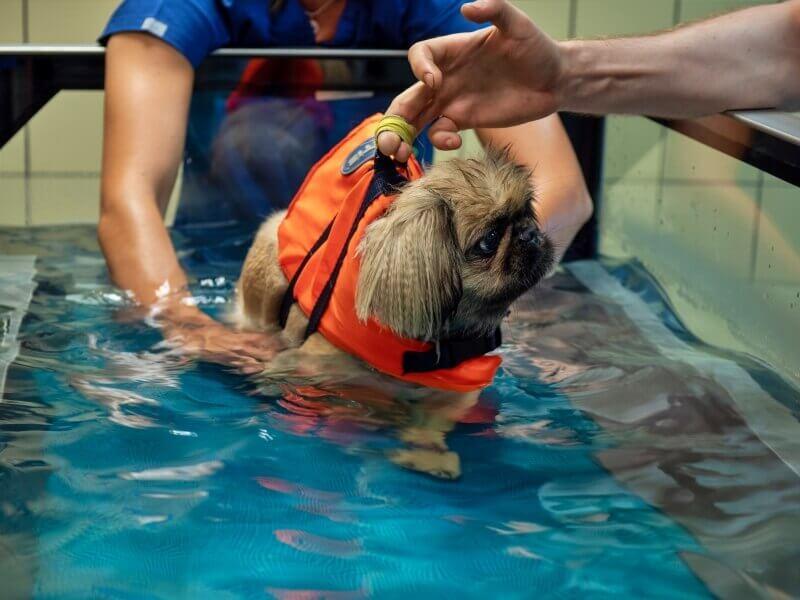 Pies podczas rehabilitacji