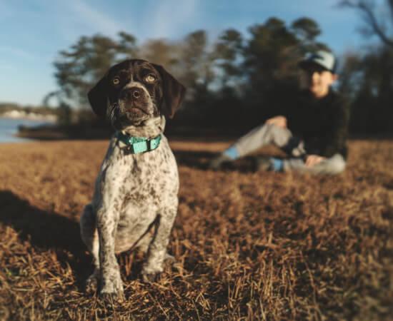 Pies i chłopiec na spacerze