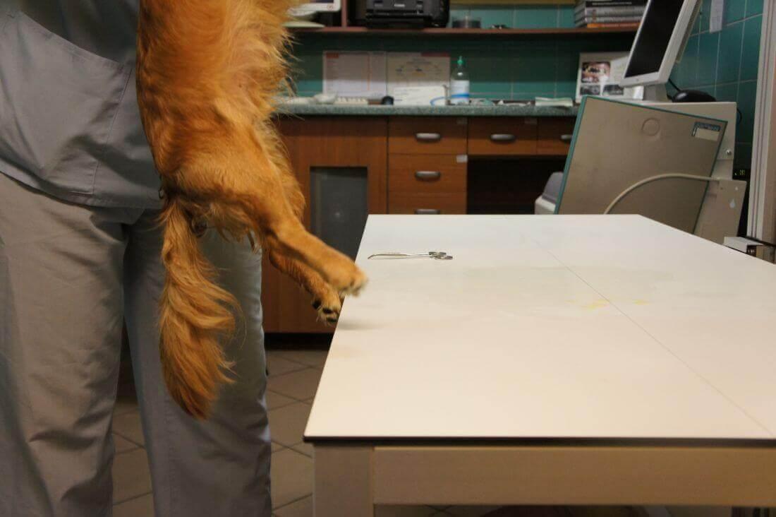 Neurologia dla zwierząt