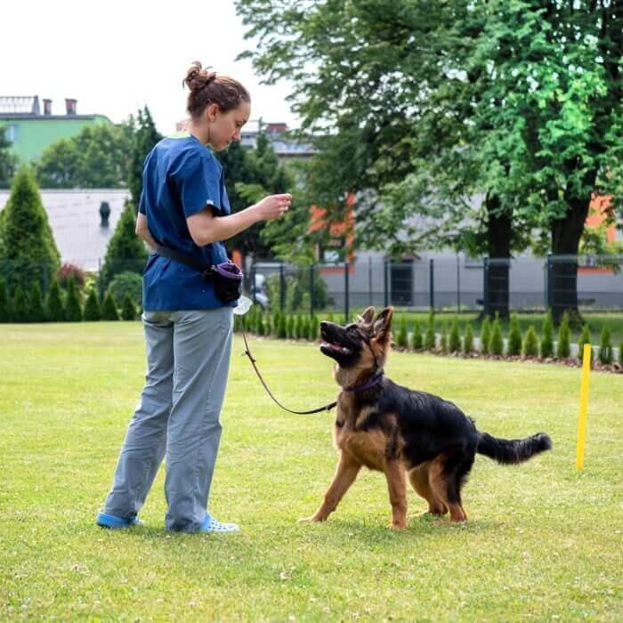 Szkolenie dla psów