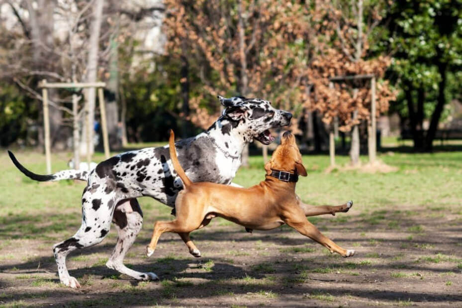 Psy bawią się razem