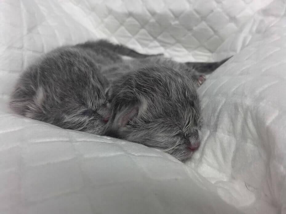 Śpiący mały kot