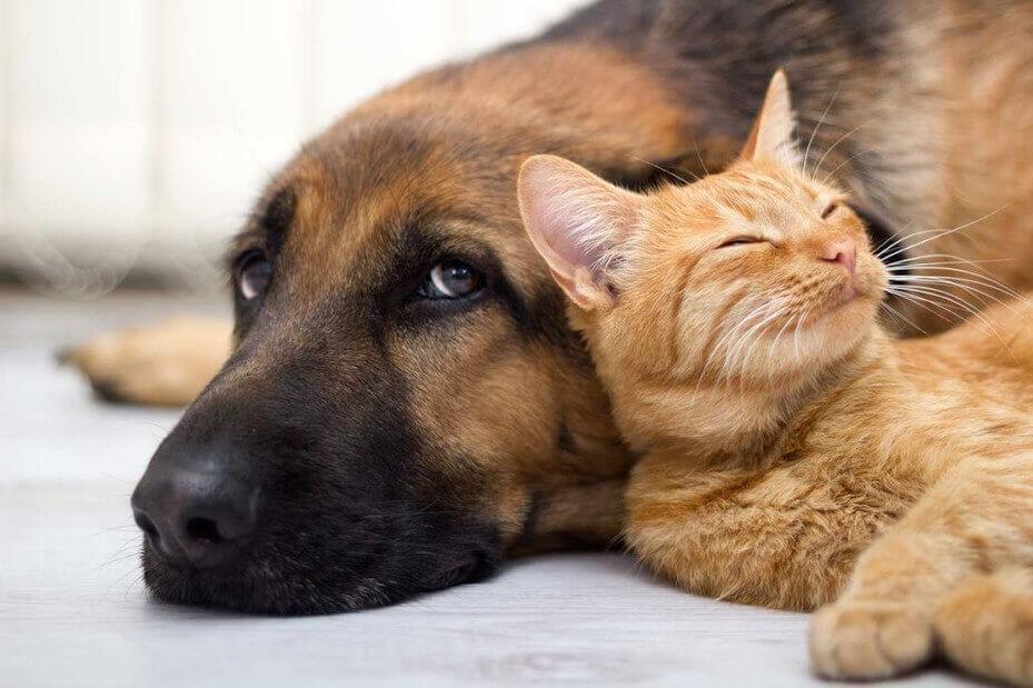 Kot i pies razem odpoczywają