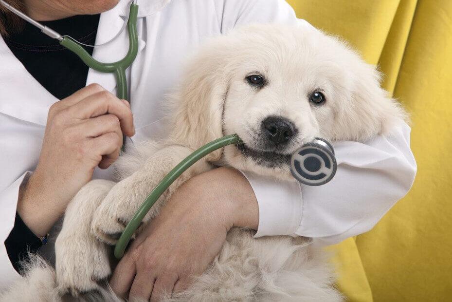 Pies i weterynarz