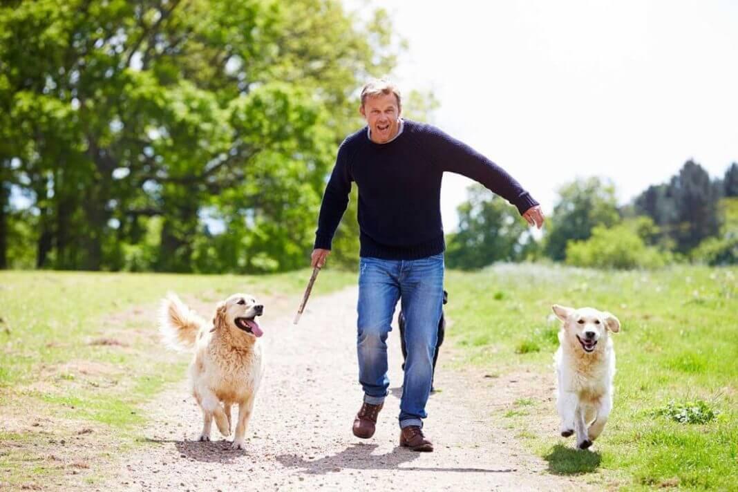 Psy bawią się z właścicielem