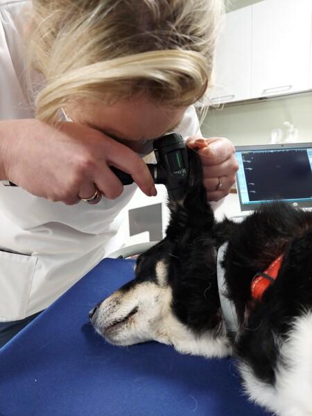 badanie otoskopowe